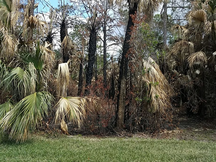 Brush Fire in Naples, FL Melts Solar Pool Panels